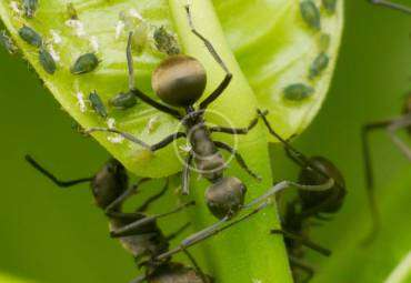 Pest Control Exterminator Near Me